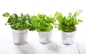 Make Your Own Herb Pot