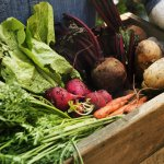 organic fruits and vegetables important