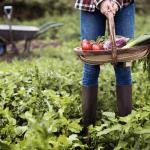 gardening tips vegetable garden