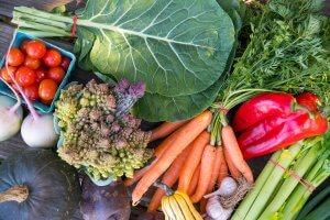 tsa box 19 vegetables