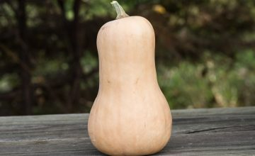 Single butternut squash