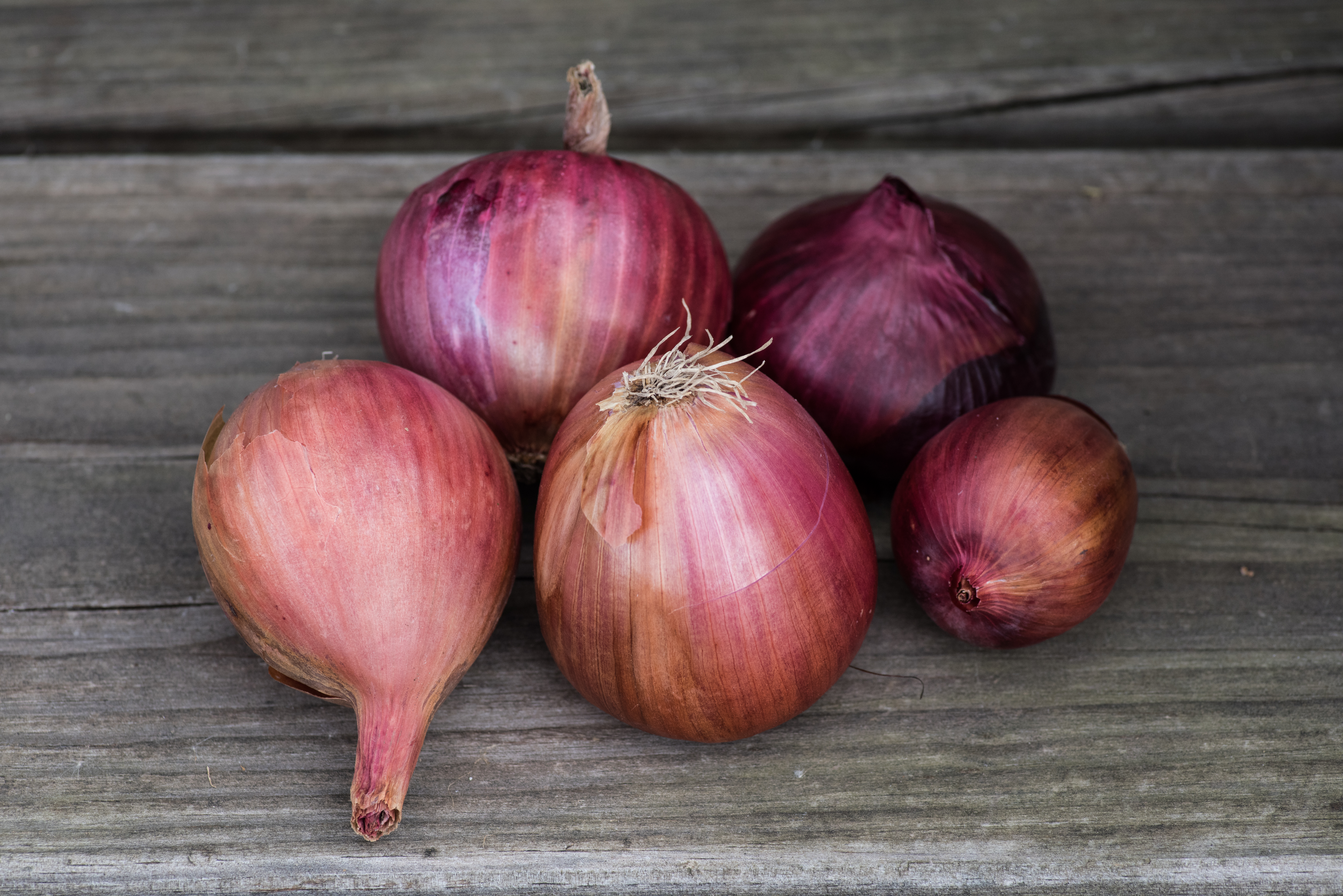 Variety of onions from Wozupi